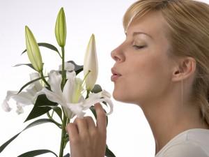 Вреден ли запах лилий?