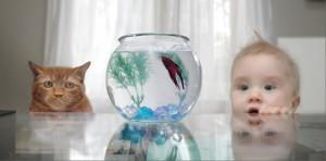 Вреден ли аквариум?