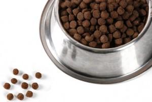 Вреден ли сухой корм для собак и кошек?