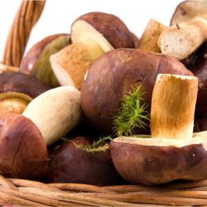 Вредны ли грибы?