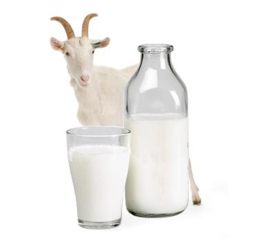 Полезно ли детям козье молоко