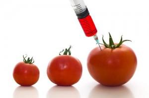Чем вредны ГМО?