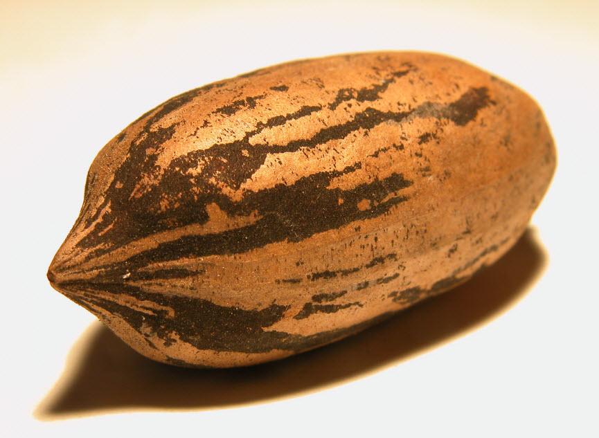 корень солодки при холестерине